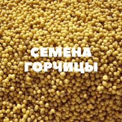 Семена горчицы на посев