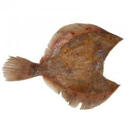 Камбала пбг, 0,5-1 кг