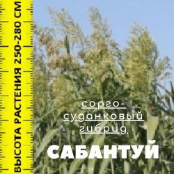 Семена сорго-суданкового гибрида на посев