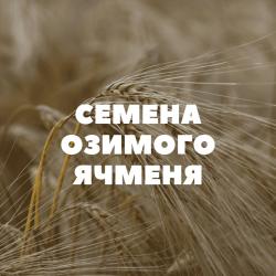 Семена озимого ячменя на посев