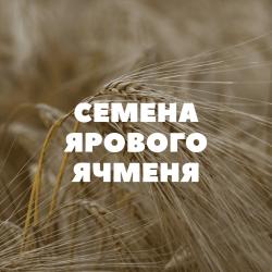 Семена ярового ячменя на посев